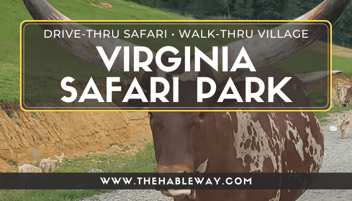 Virginia Safari Park – A Unique Drive-Thru Safari in Natural Bridge, VA